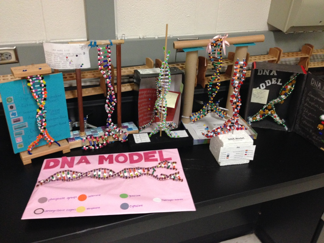 Dna Models Projects Pipe Cleaners Dna Model Project Examples